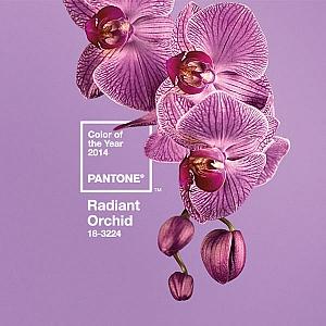 Сияеща орхидея