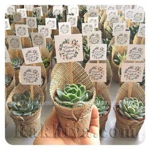 Идея за сватбени подаръци: опаковани в зебло живи цветя в саксия